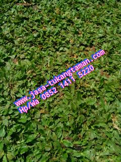 http://www.jasa-tukangtaman.com/2017/01/tukang-taman-pamulang.html