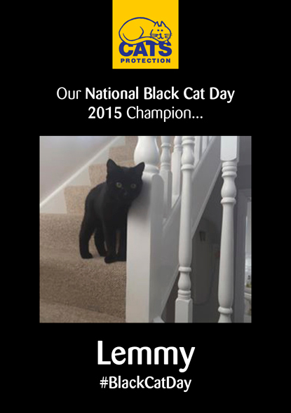 poster showing photo of black cat standing on stairs