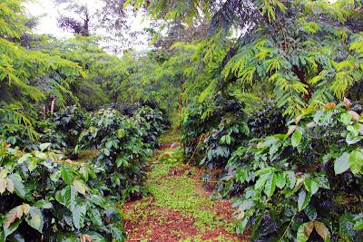Bolaven Plateau Plateau - Laos