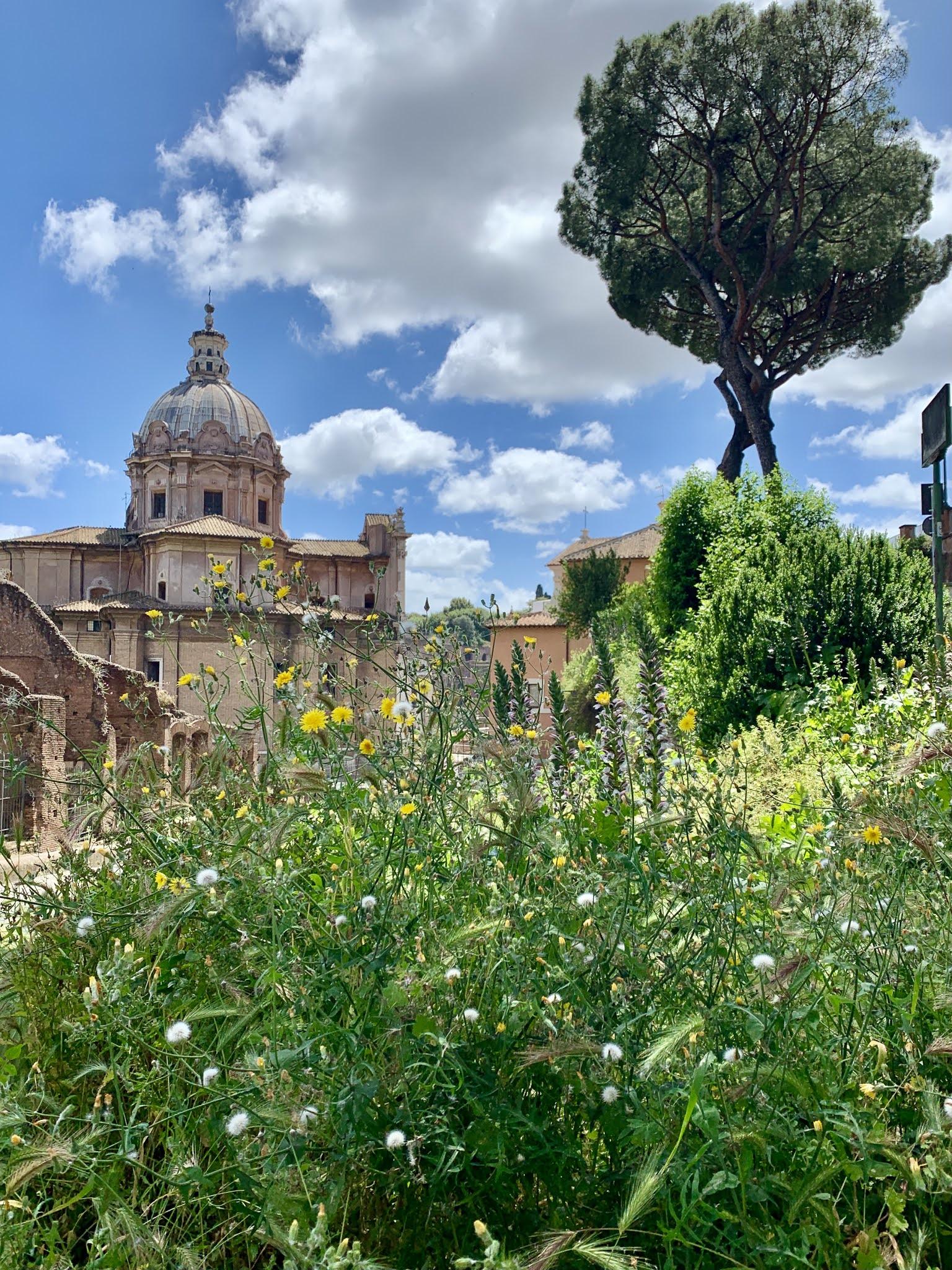 weeds & wildflowers in the Roman Forum
