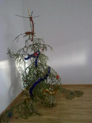 Un triste ramo di abete utilizzato come albero di Natale