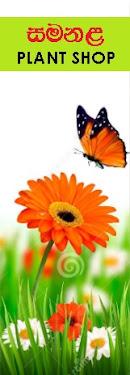 SLButterflies