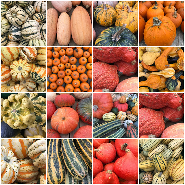 A colourful selection of edible pumpkins.