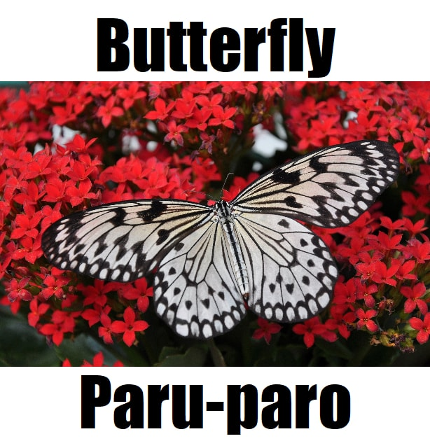 Butterfly In Tagalog