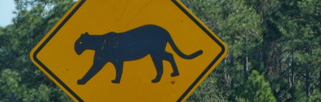 Señales en la carretera pidiendo precaución por la presencia de las amenazadas y amenazantes panteras