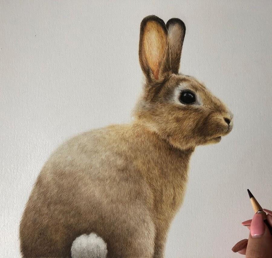 11-Bunny-Rabbit-Bethany-Vere-www-designstack-co