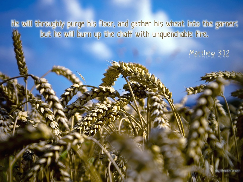 Image result for separate the chaff from the wheat bible