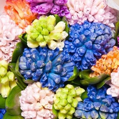 hình ảnh đẹp hoa dạ hương lan