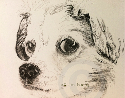 Pet portrait of a dog in graphite. Surrey, Kent, London, Sussex.