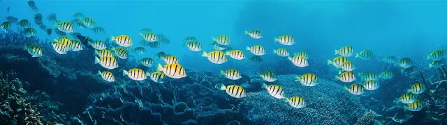 Peces Palma Aquarium