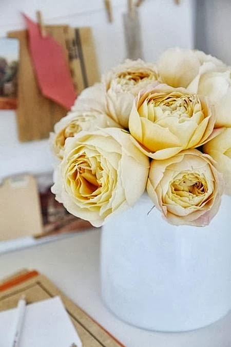 amazing light yellow roses