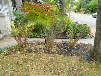 Toronto Beach Hill Fall Garden Cleanup After by Paul Jung Gardening Services--a Toronto Gardening Company