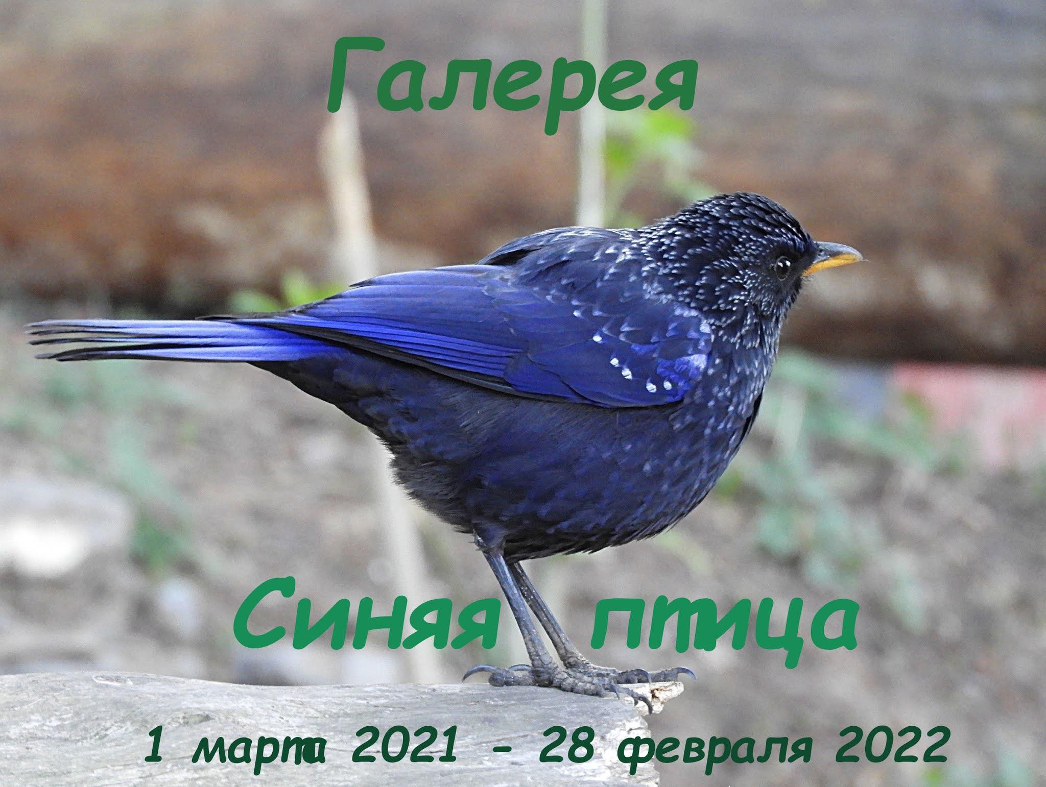 """Галерея """"Синяя птица"""""""