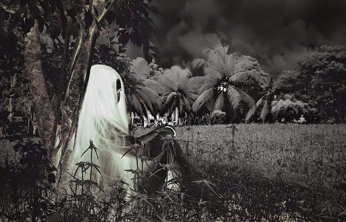Penampakan Kuntilana di kebun dan dekat pohon kelapa