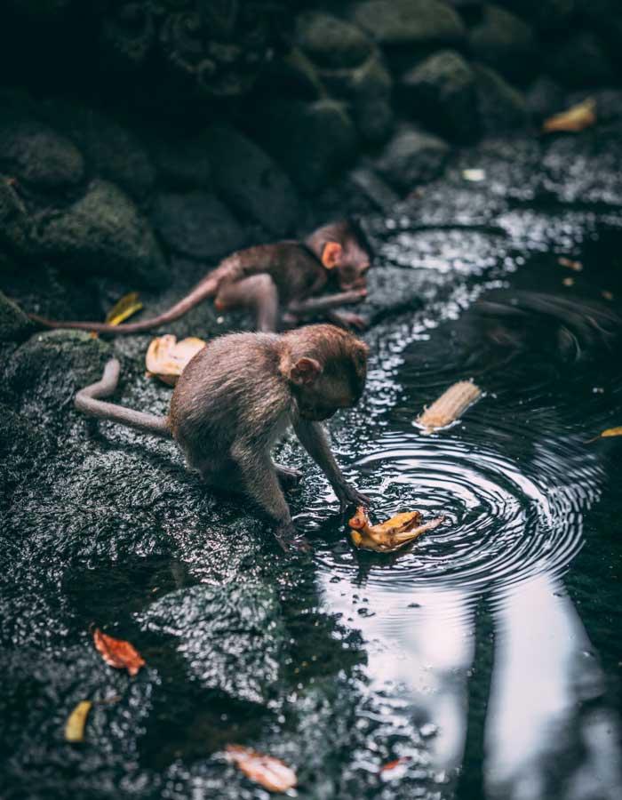 Rute Lokasi Sacred Monkey Forest Ubud Bali