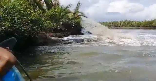 Ikan paus cilacap