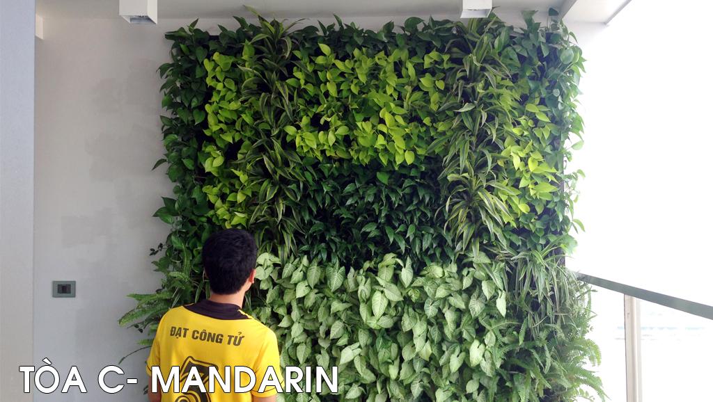 Vườn đứng P.h. Mandarin
