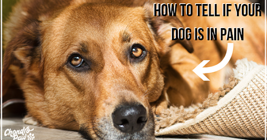 5 SIGNS THAT YOUR DOG IS SUFFERING