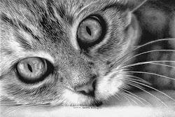cat realistic drawings pencil inspire hyper drawing cats kitten paintings fine arts