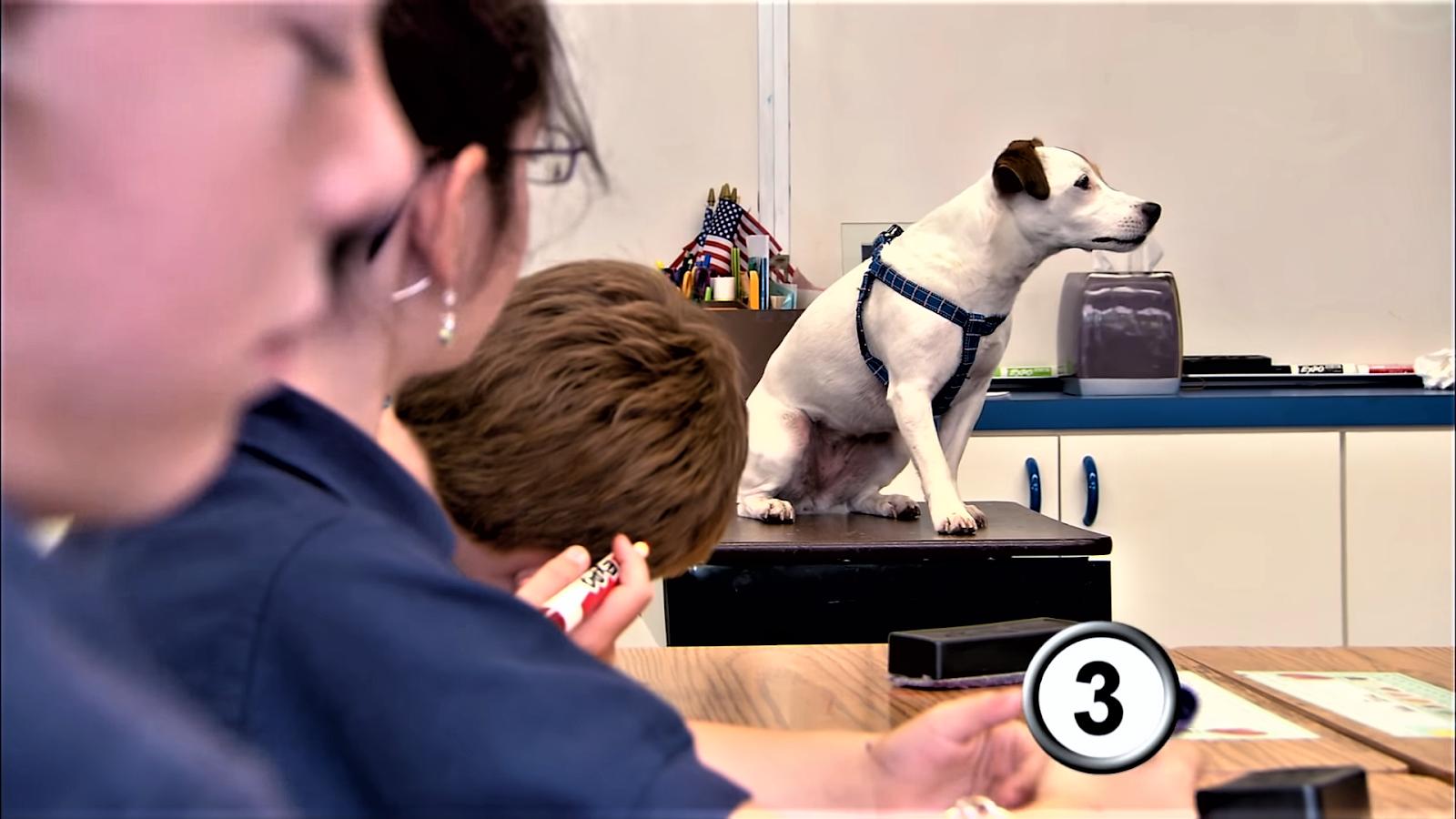 Dogs do math, dog in class.