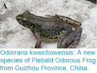 https://sciencythoughts.blogspot.com/2018/11/odorrana-kweichowensis-new-species-of.html