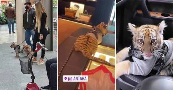Bella mujer genera criticas al pasear su tigre de bengala por centro comercial