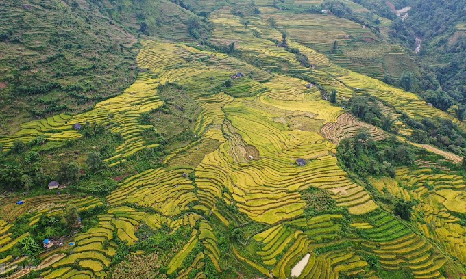 Ripening rice terraces bring a smile to harvesting farmers