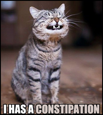 Funny cat has a constipation. Poor guy..