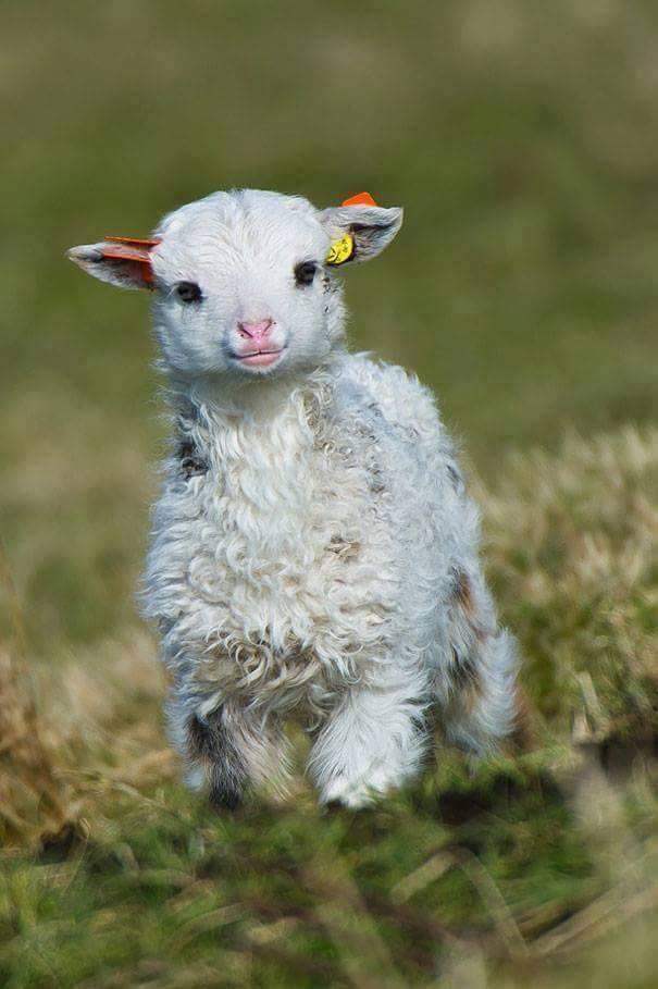 lindos%2Banimais%2Bbebe%2B%2B%252815%2529 - Os filhotes de animais mais lindinhos que você já viu!