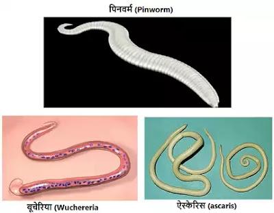 जन्तु जगत का वर्गीकरण (Taxonomy of Animal Kingdom) |