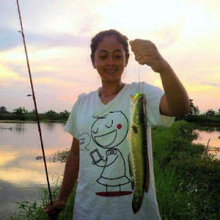 Tips mancing gabus kimbun kimberly