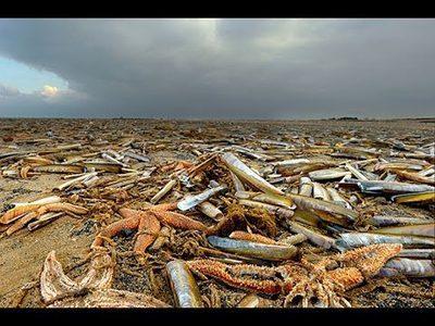 Fukushima radiation the entire pacific ocean has been for Pacific ocean radiation fish
