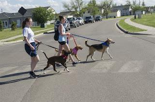 Dogs Take Us Walking
