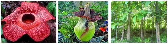 4400 Koleksi Gambar Flora Indonesia Bagian Barat Beserta Penjelasannya HD