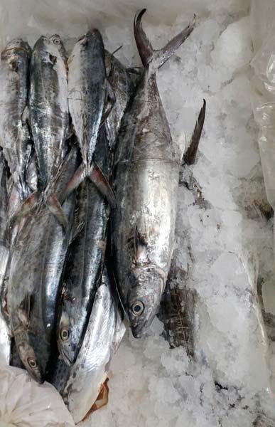 jual ikan beku di jakarta