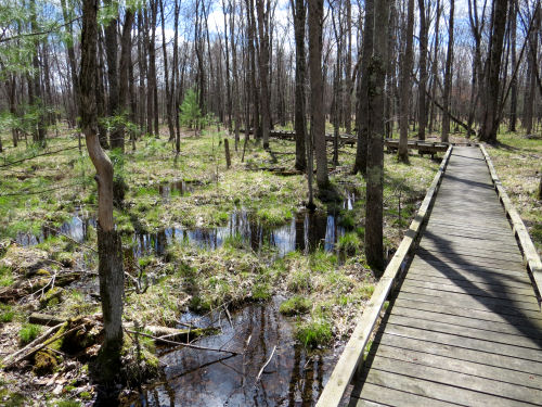 sterling marsh
