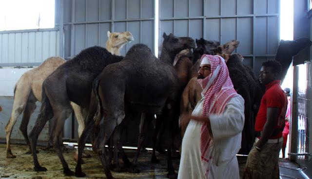 """Menelusuri Praktik Para """"PANGDAM"""" di Makkah, Semusim Haji Bisa Untung 7Milyar"""