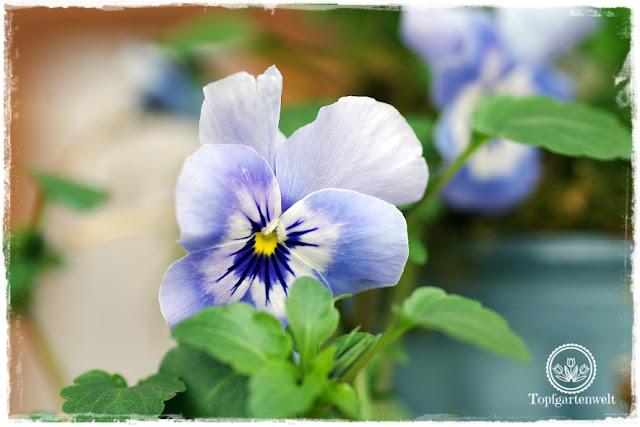 Gartenblog Topfgartenwelt natürliche moderne Osterdeko für den Garten: Ostern im Garten mit Blumen gestalten