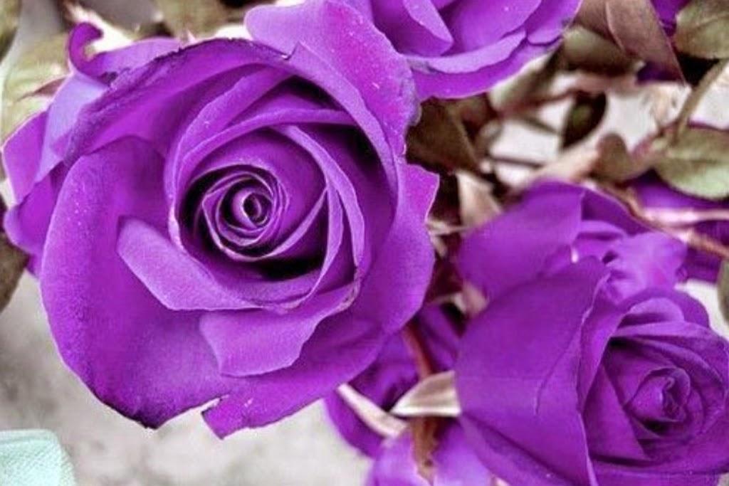 10 Gambar Bunga Warna PurpleUnguViolet  Gambar Top 10