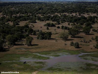 إكتشاف نوع جديد من الثدييات في الغابات الجبلية بأفريقيا
