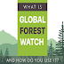 What Is Global Forest Watch and How Do You Use It? #infographic