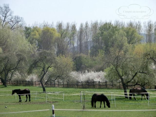 весна в Венгрии, веломаршруты Венгрии, хюгге, рустик, блоги о жизни за границей, ваби саби, о жизни в венгрии