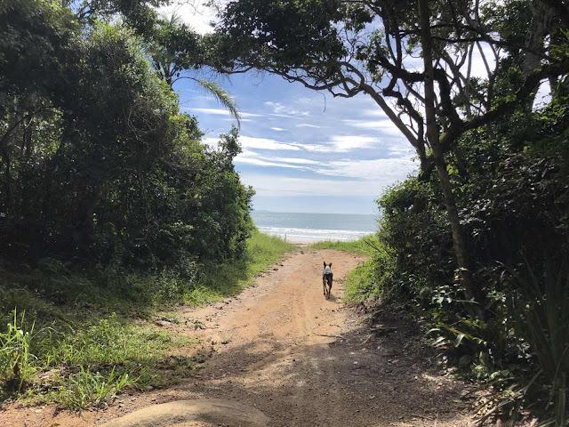 Caminho para Praia do Sissial