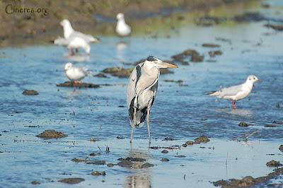 Los hábitats acuáticos ofrecen una variedad de ornitofauna muy elevada