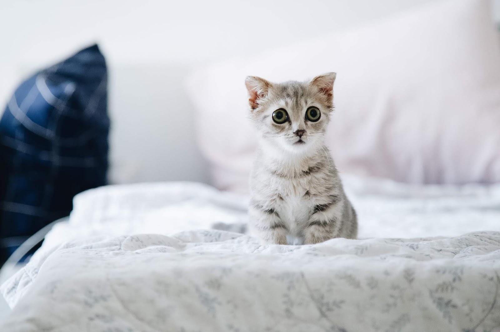 Anak Kucing Dimakan Oleh Ibunya Punca Dan Teori Mengikut