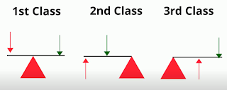 1st 2nd 3rd class lever