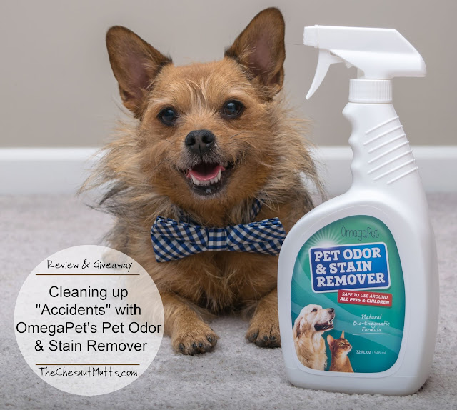 "Review & Giveaway: Cleaning up ""Accidents"" with OmegaPet's Pet Odor & Stain Remover"