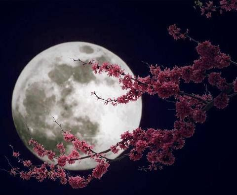 flower-moon-in-the-month-of-april