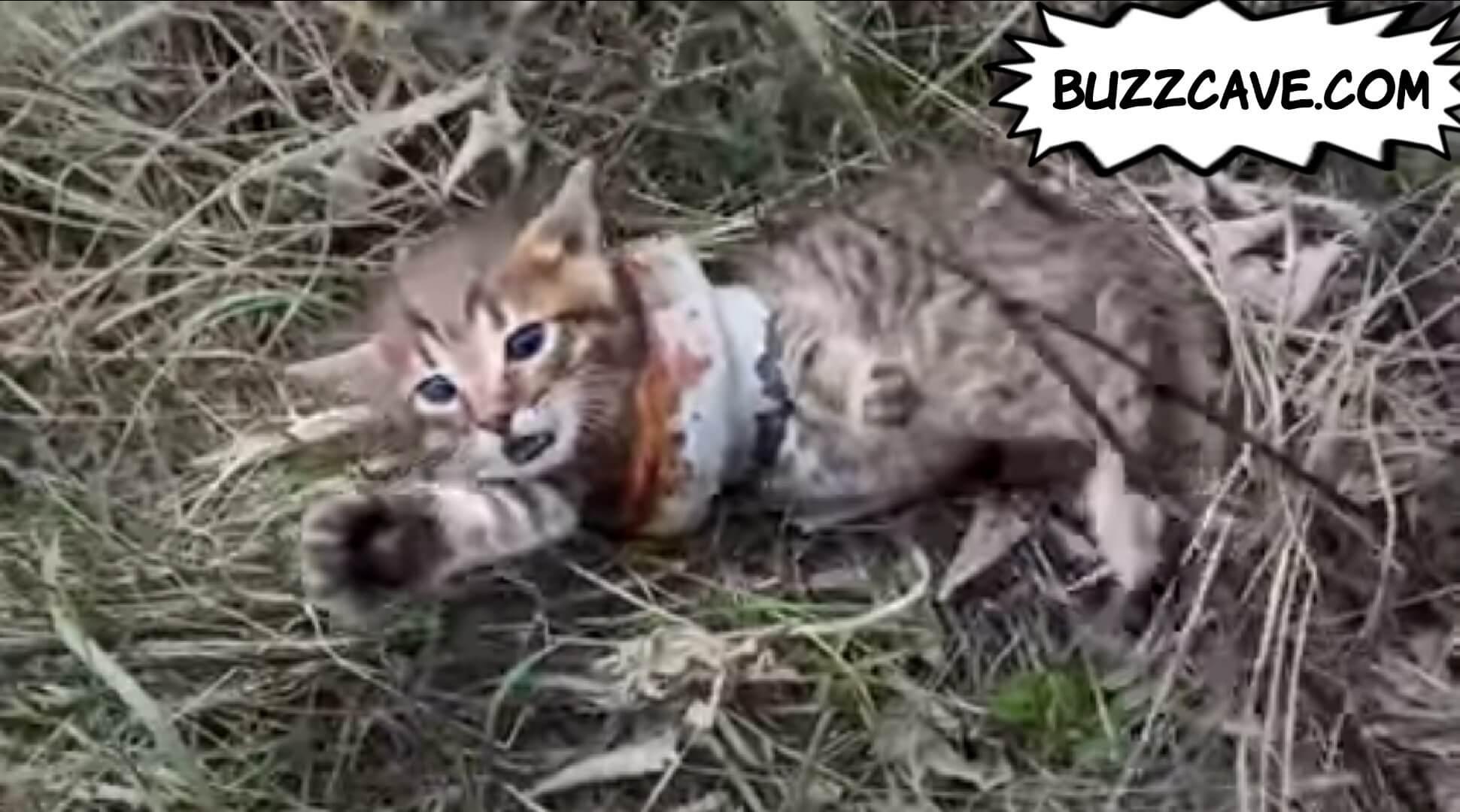 cat in pain