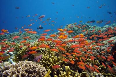 keindahan terumbu karang dan berbagai jenis ikan yang menawan